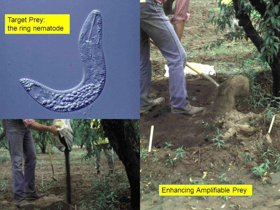 Enhancing Amplifiable Prey Target Prey: the ring nematode