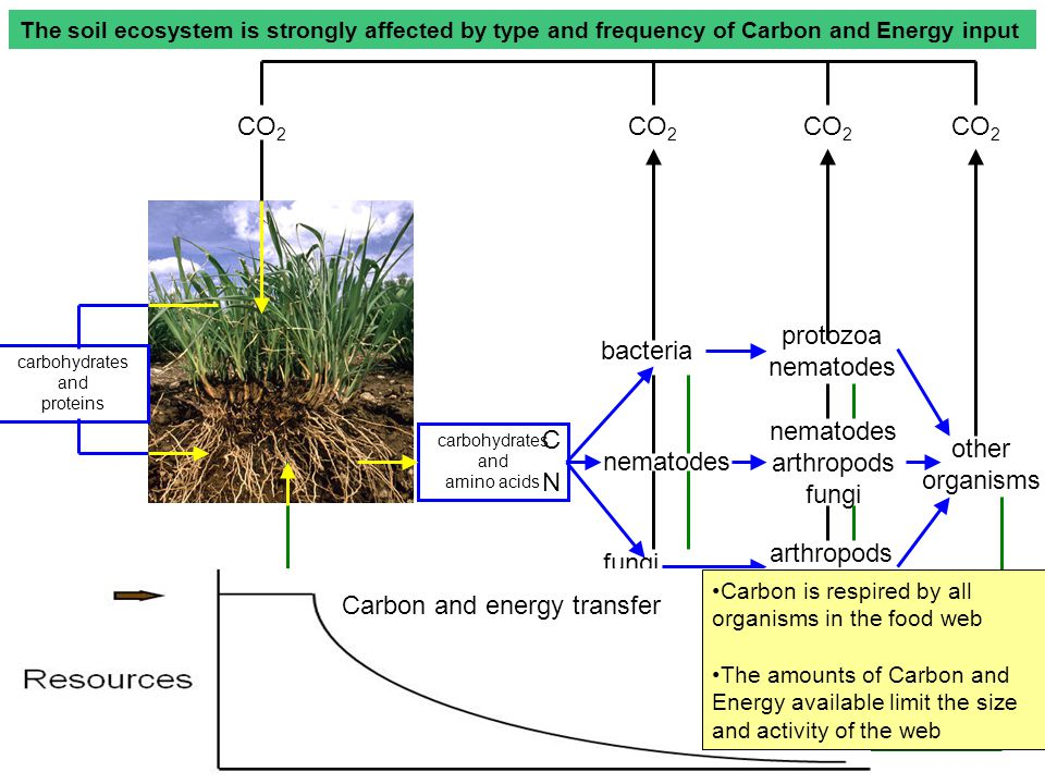 Infrequent (Punctuated) Resource Input Carbon and Energy Subsidy Effects Prey resources Predators