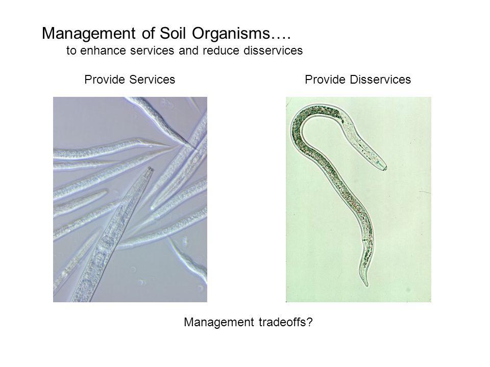 Nematode Sensitivity to Mineral Fertilizer Tenuta and Ferris, 2004 Soil Ecosystem – environmental effects on Structure