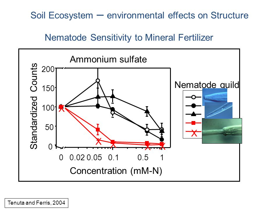 Nematode Sensitivity to Mineral Fertilizer Tenuta and Ferris, 2004 Soil Ecosystem – environmental effects on Structure