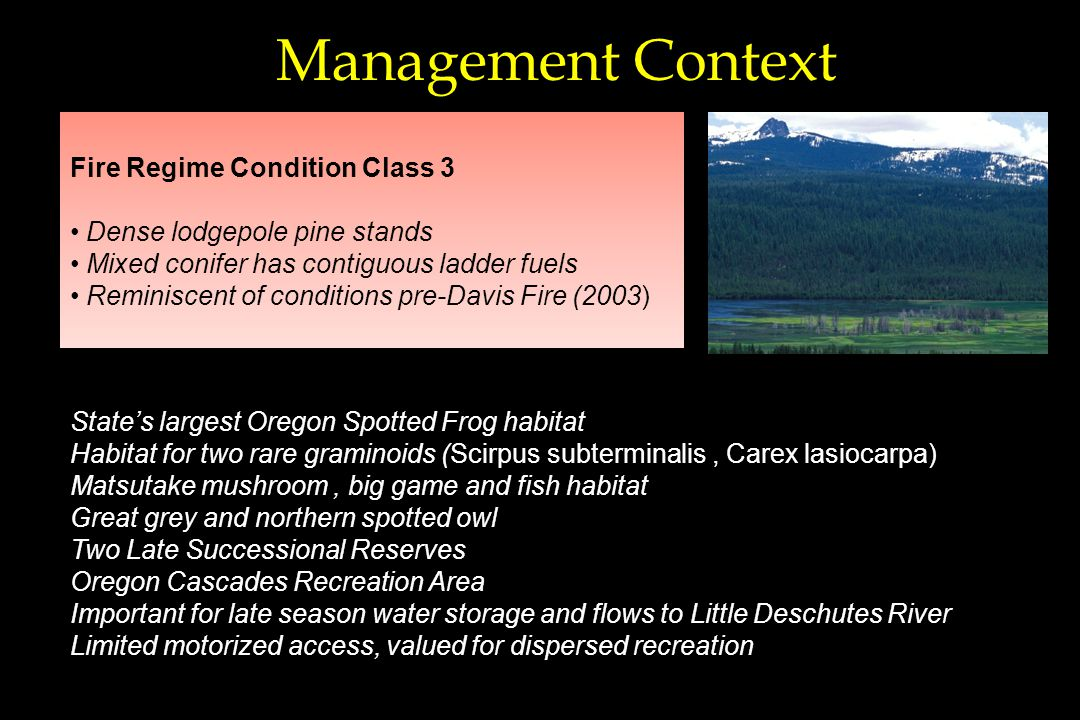 Management Context States largest Oregon Spotted Frog habitat Habitat for two rare graminoids (Scirpus subterminalis, Carex lasiocarpa) Matsutake mushroom, big game and fish habitat Great grey and northern spotted owl Two Late Successional Reserves Oregon Cascades Recreation Area Important for late season water storage and flows to Little Deschutes River Limited motorized access, valued for dispersed recreation Fire Regime Condition Class 3 Dense lodgepole pine stands Mixed conifer has contiguous ladder fuels Reminiscent of conditions pre-Davis Fire (2003)