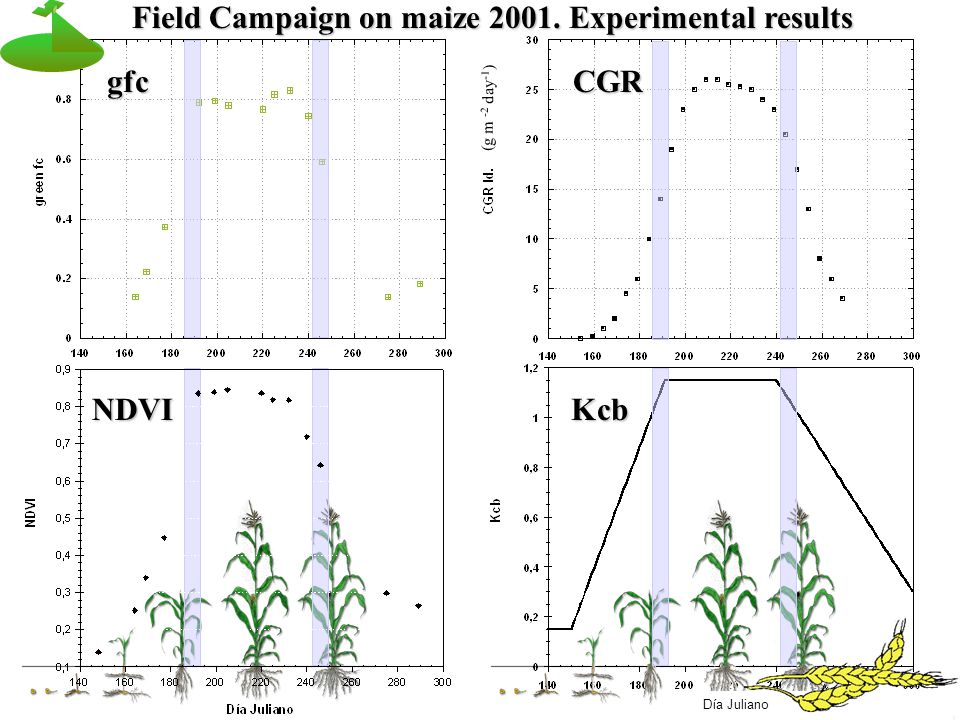 (g m -2 day -1 ) Día Juliano NDVI gfcCGR Kcb Field Campaign on maize 2001. Experimental results