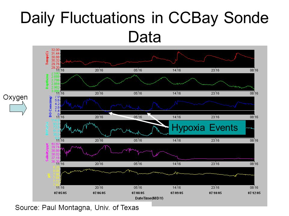 Daily Fluctuations in CCBay Sonde Data Source: Paul Montagna, Univ. of Texas Oxygen Hypoxia Events