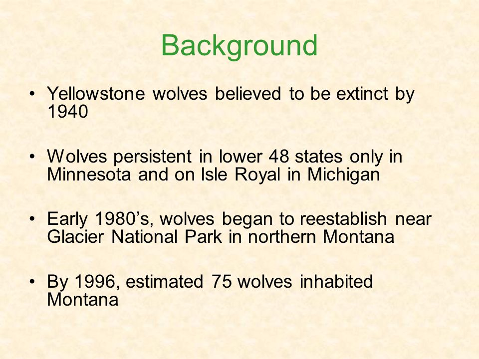 Background Yellowstone wolves believed to be extinct by 1940 Wolves persistent in lower 48 states only in Minnesota and on Isle Royal in Michigan Early 1980s, wolves began to reestablish near Glacier National Park in northern Montana By 1996, estimated 75 wolves inhabited Montana
