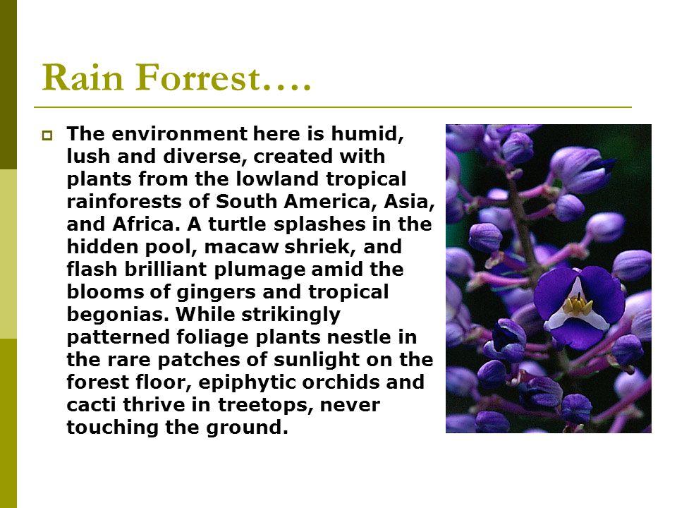 Rain Forrest….