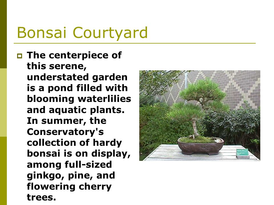 Bonsai Courtyard The centerpiece of this serene, understated garden is a pond filled with blooming waterlilies and aquatic plants.
