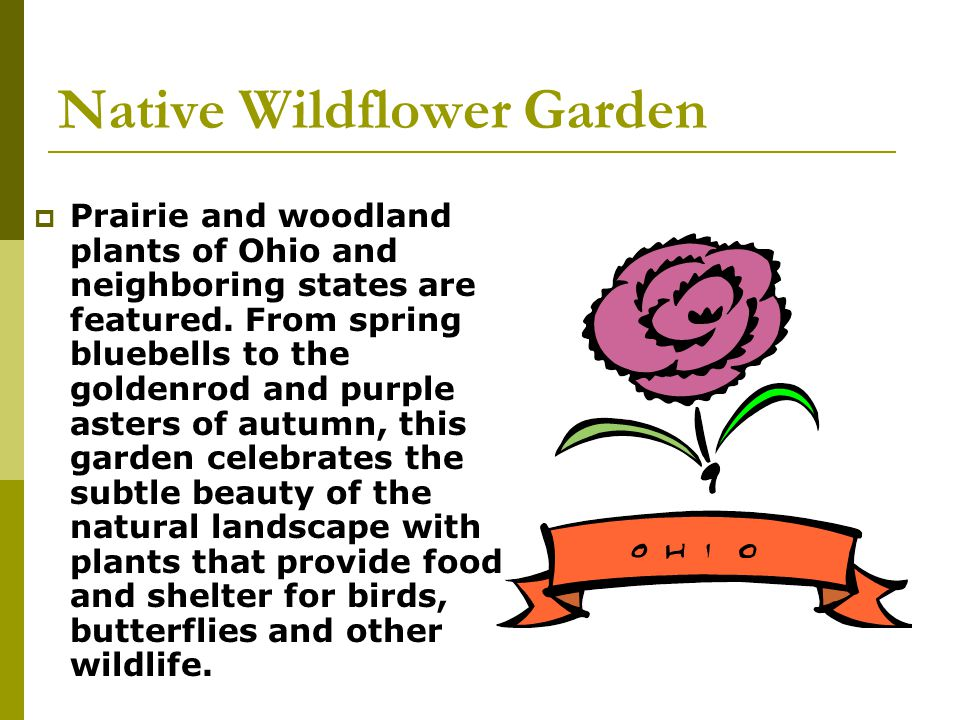Native Wildflower Garden Prairie and woodland plants of Ohio and neighboring states are featured. From spring bluebells to the goldenrod and purple as