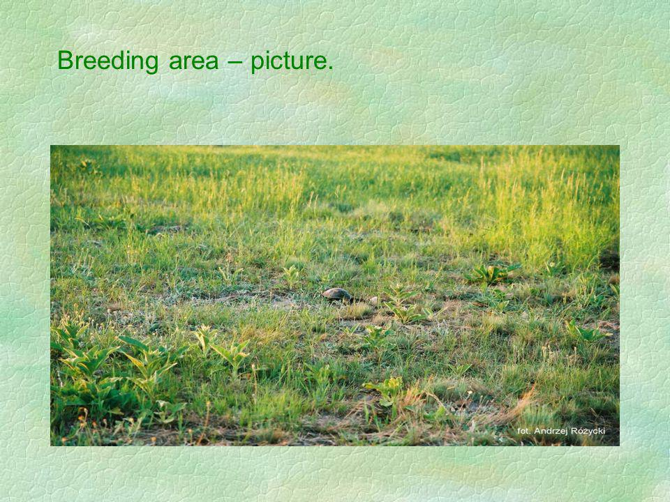 Breeding area – picture.