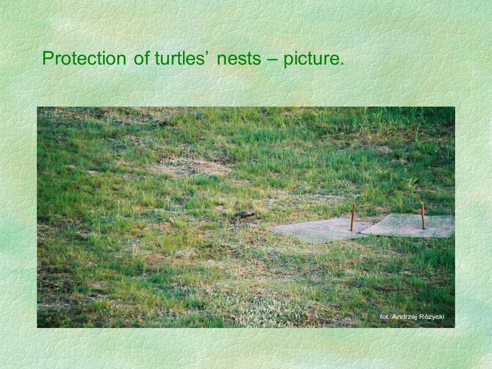 Protection of turtles nests – picture.