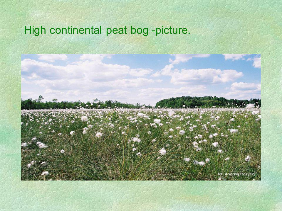High continental peat bog -picture.