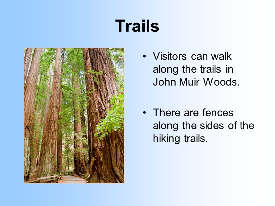 Trails Visitors can walk along the trails in John Muir Woods.