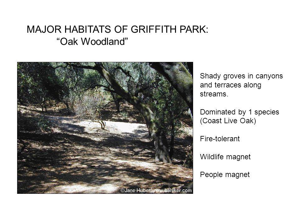 MAJOR HABITATS OF GRIFFITH PARK: Oak Woodland Shady groves in canyons and terraces along streams.