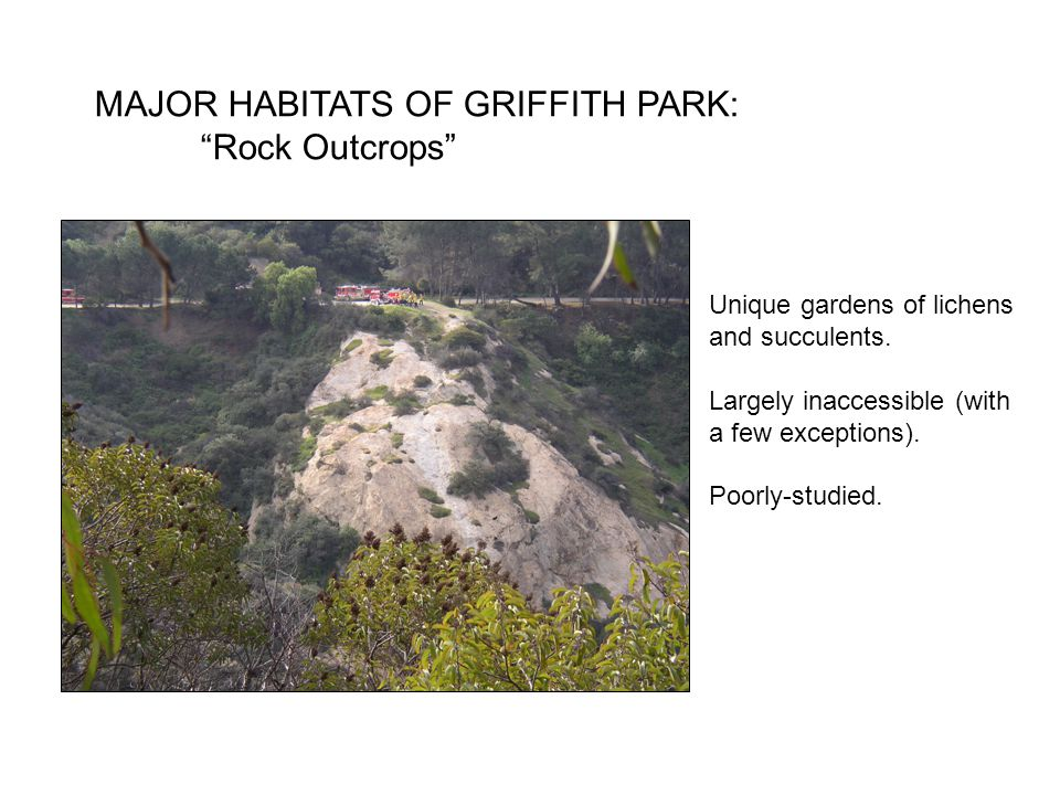 MAJOR HABITATS OF GRIFFITH PARK: Rock Outcrops Unique gardens of lichens and succulents.