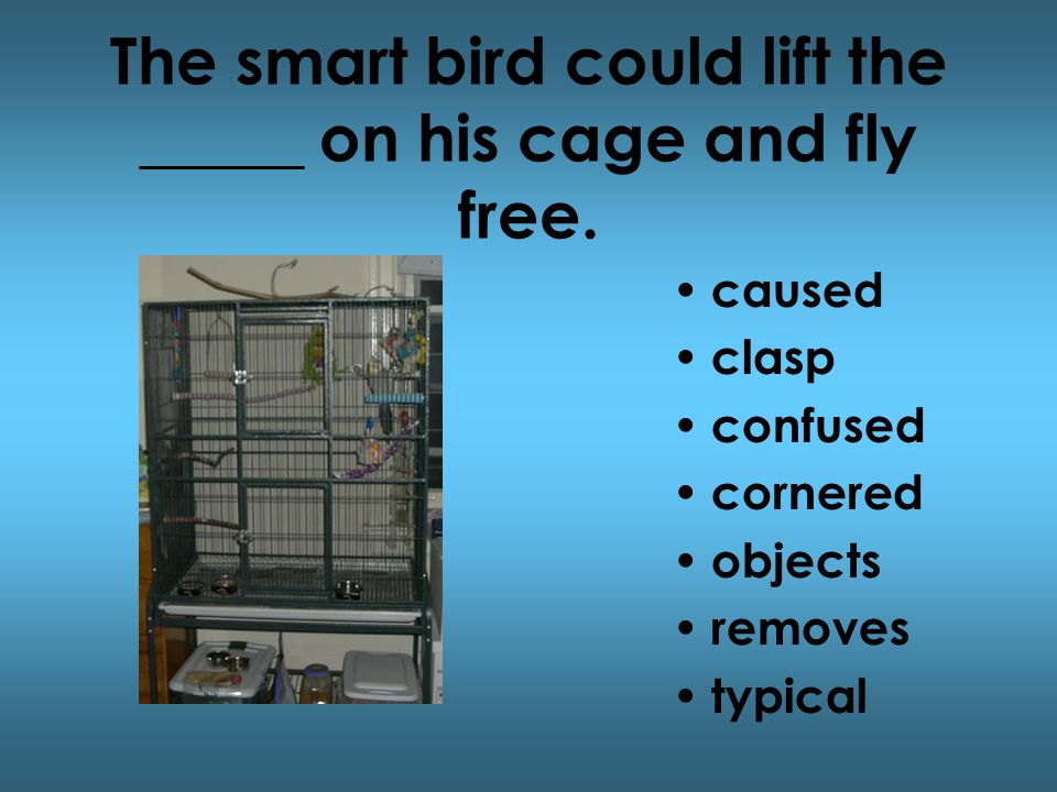The smart bird could lift the _____ on his cage and fly free.