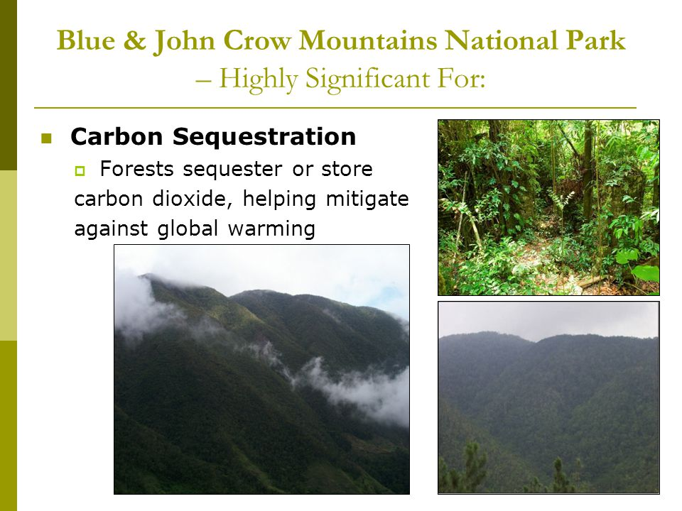 Blue & John Crow Mountains National Park – Highly Significant For: Carbon Sequestration Forests sequester or store carbon dioxide, helping mitigate against global warming