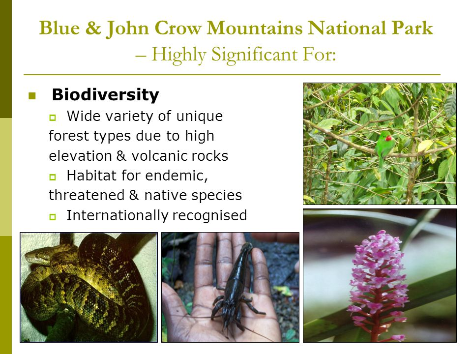 Blue & John Crow Mountains National Park – Highly Significant For: Biodiversity Wide variety of unique forest types due to high elevation & volcanic r
