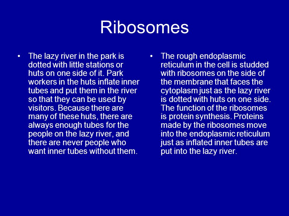 Ribosomes The lazy river in the park is dotted with little stations or huts on one side of it. Park workers in the huts inflate inner tubes and put th