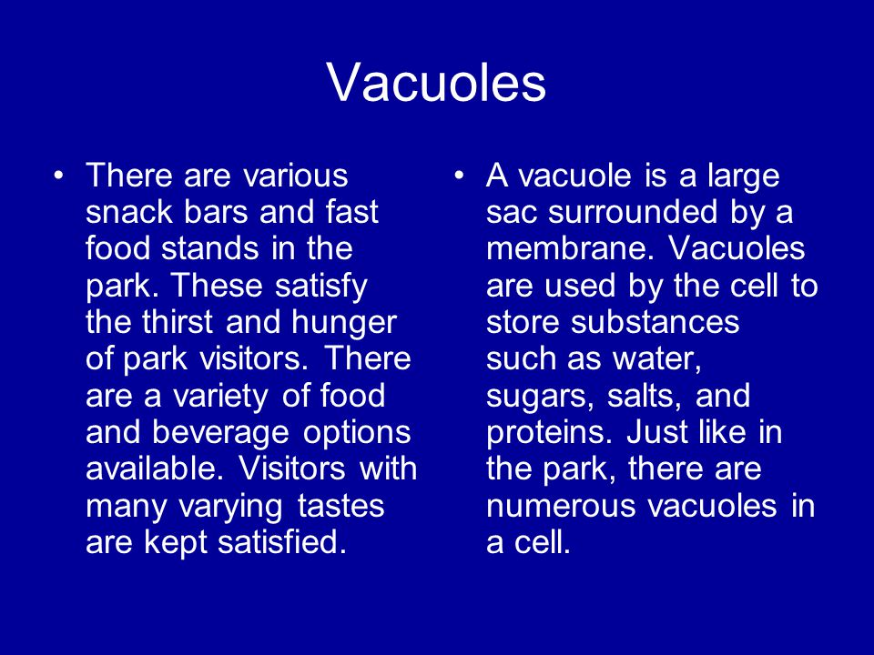 Vacuoles There are various snack bars and fast food stands in the park. These satisfy the thirst and hunger of park visitors. There are a variety of f