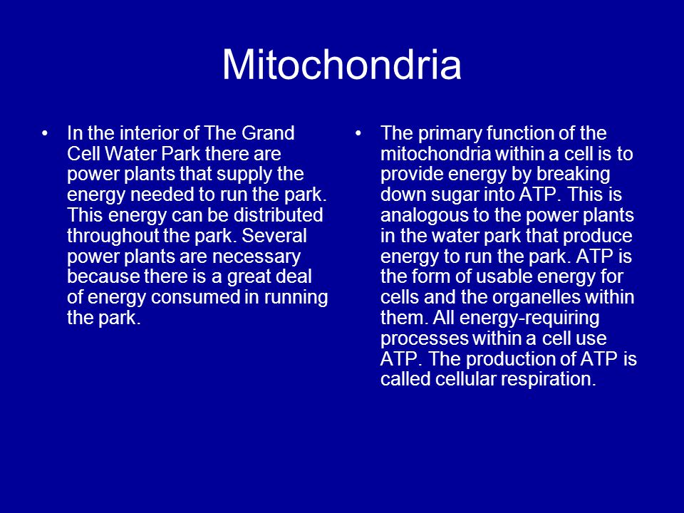 Mitochondria In the interior of The Grand Cell Water Park there are power plants that supply the energy needed to run the park. This energy can be dis