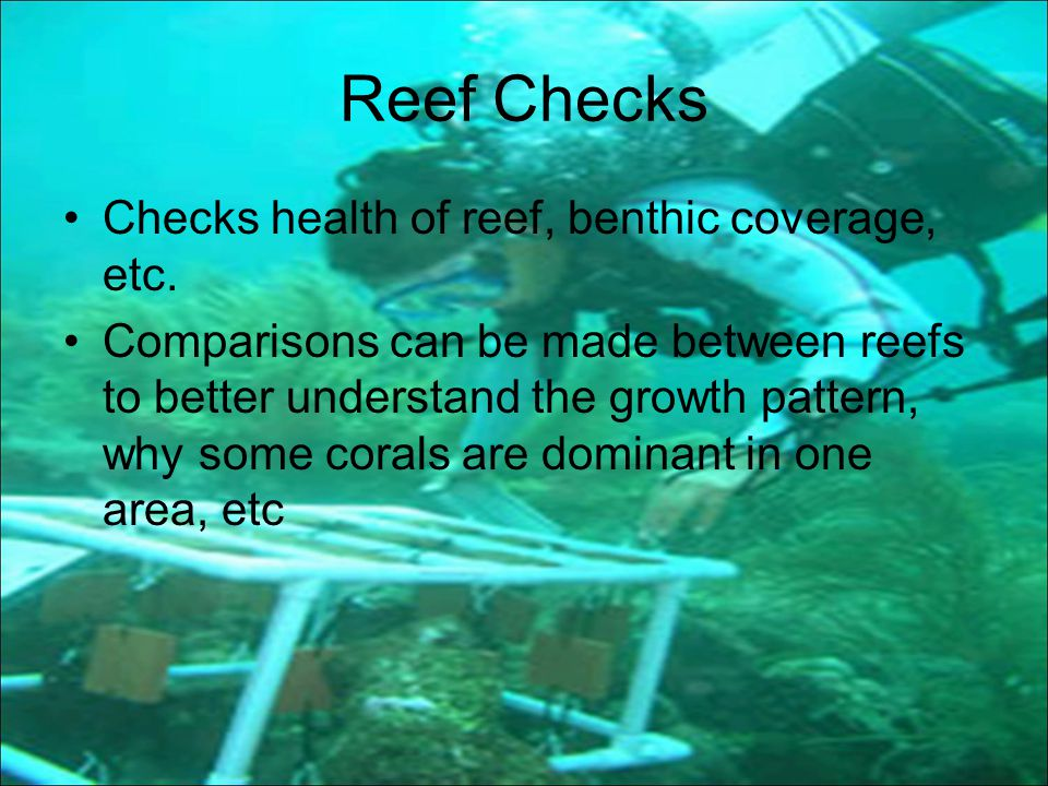 Reef Checks Checks health of reef, benthic coverage, etc.