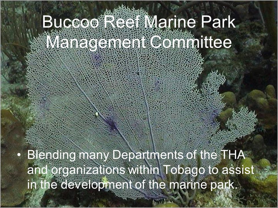 Buccoo Reef Marine Park Management Committee Blending many Departments of the THA and organizations within Tobago to assist in the development of the marine park.