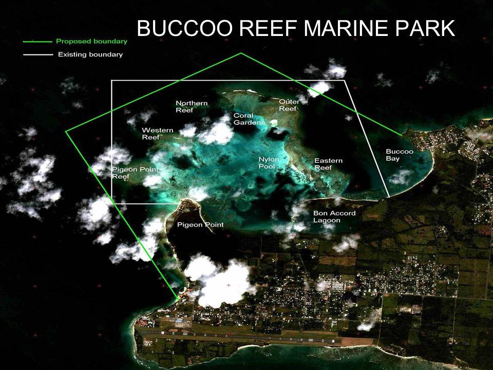 BUCCOO REEF MARINE PARK