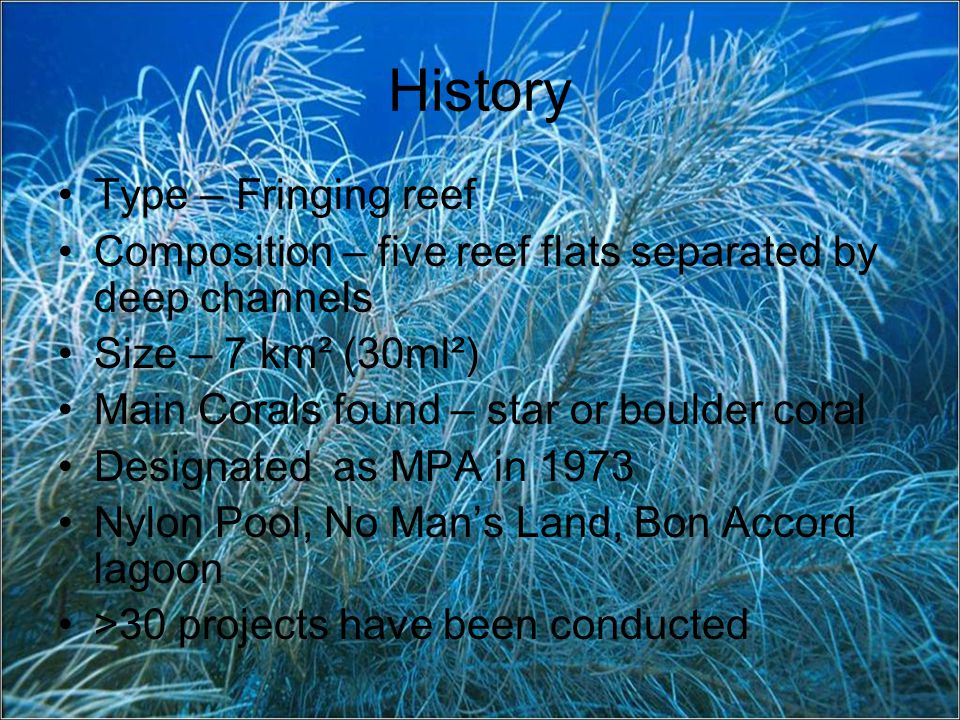 History Type – Fringing reef Composition – five reef flats separated by deep channels Size – 7 km² (30ml²) Main Corals found – star or boulder coral Designated as MPA in 1973 Nylon Pool, No Mans Land, Bon Accord lagoon >30 projects have been conducted
