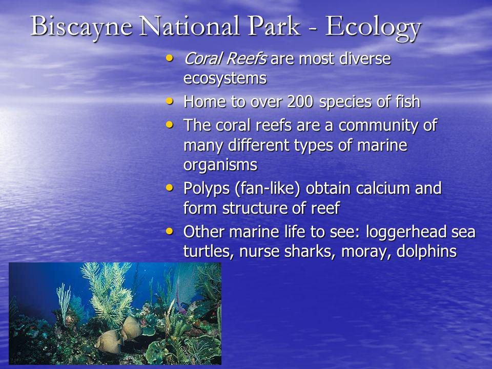 Biscayne National Park - Ecology Coral Reefs are most diverse ecosystems Coral Reefs are most diverse ecosystems Home to over 200 species of fish Home to over 200 species of fish The coral reefs are a community of many different types of marine organisms The coral reefs are a community of many different types of marine organisms Polyps (fan-like) obtain calcium and form structure of reef Polyps (fan-like) obtain calcium and form structure of reef Other marine life to see: loggerhead sea turtles, nurse sharks, moray, dolphins Other marine life to see: loggerhead sea turtles, nurse sharks, moray, dolphins