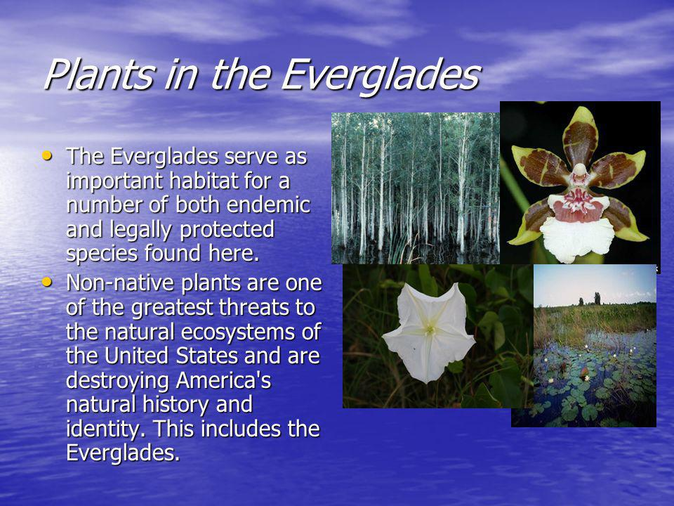Plants in the Everglades The Everglades serve as important habitat for a number of both endemic and legally protected species found here.