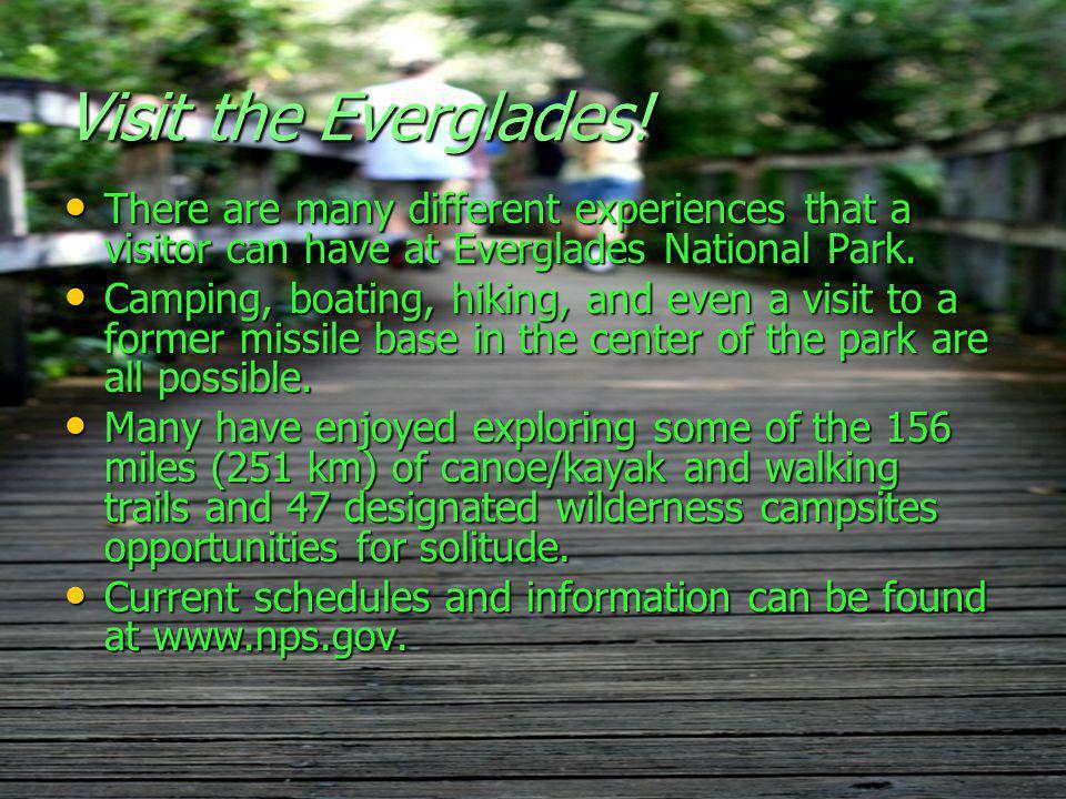 Visit the Everglades.
