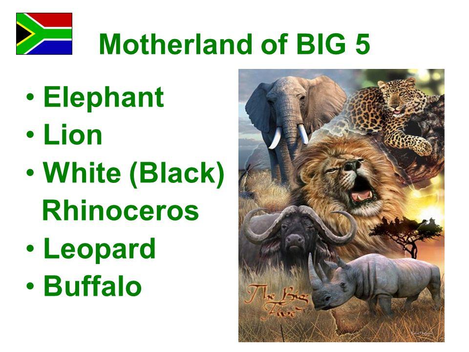 Motherland of BIG 5 Elephant Lion White (Black) Rhinoceros Leopard Buffalo