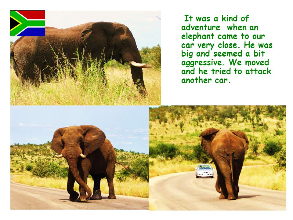 It was a kind of adventure when an elephant came to our car very close. He was big and seemed a bit aggressive. We moved and he tried to attack anothe