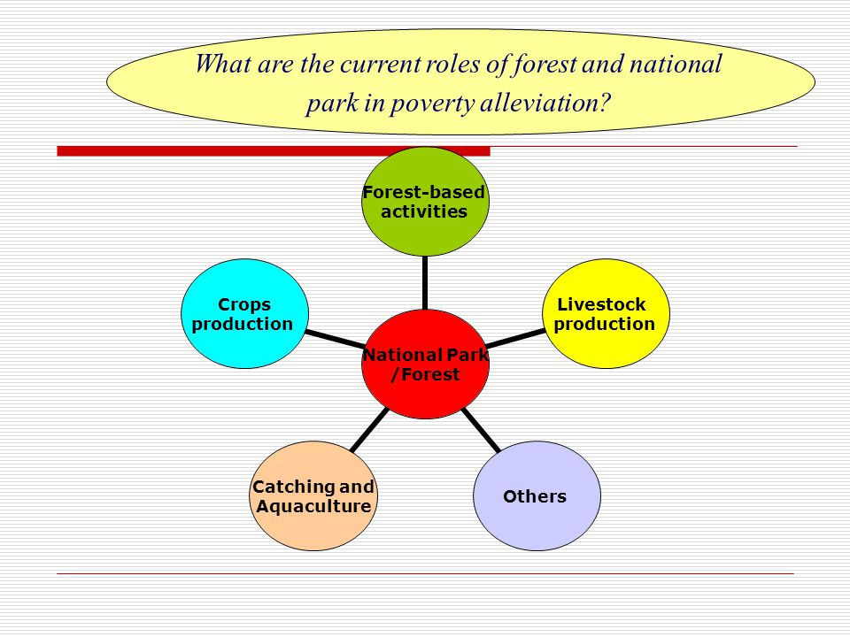 National Park /Forest Forest- based activities Livestock production Others Catching and Aquaculture Crops production What are the current roles of forest and national park in poverty alleviation