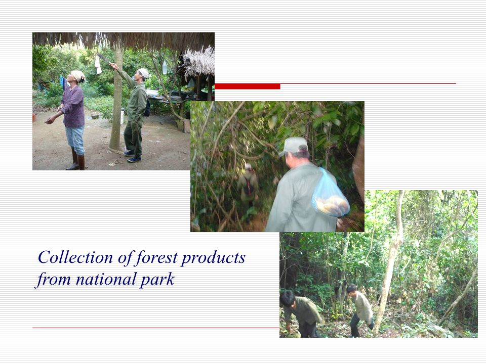 Collection of forest products from national park