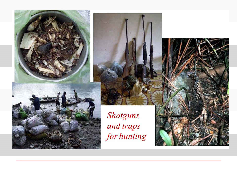 Shotguns and traps for hunting