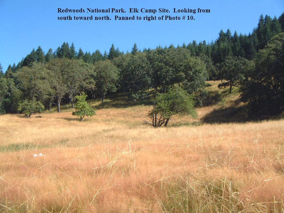 Redwoods National Park. Elk Camp Site. Looking from south toward north.