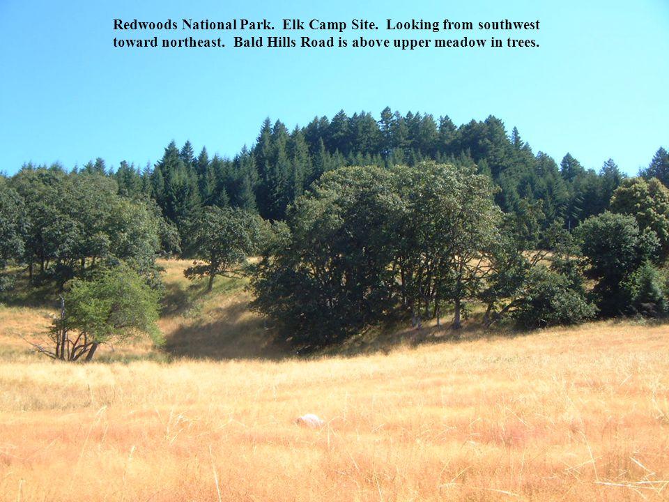 Redwoods National Park. Elk Camp Site. Looking from southwest toward northeast.