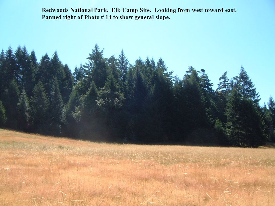 Redwoods National Park. Elk Camp Site. Looking from west toward east.