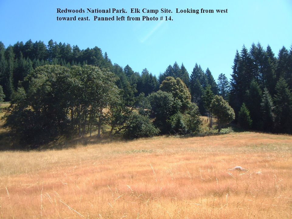 Redwoods National Park. Elk Camp Site. Looking from west toward east. Panned left from Photo # 14.