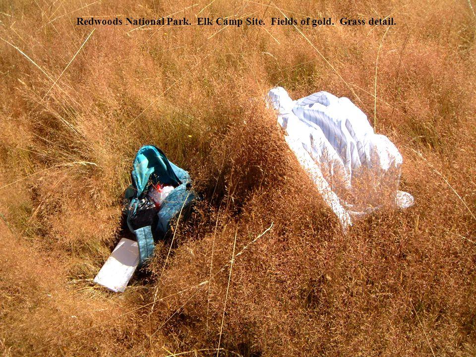 Redwoods National Park. Elk Camp Site. Fields of gold. Grass detail.