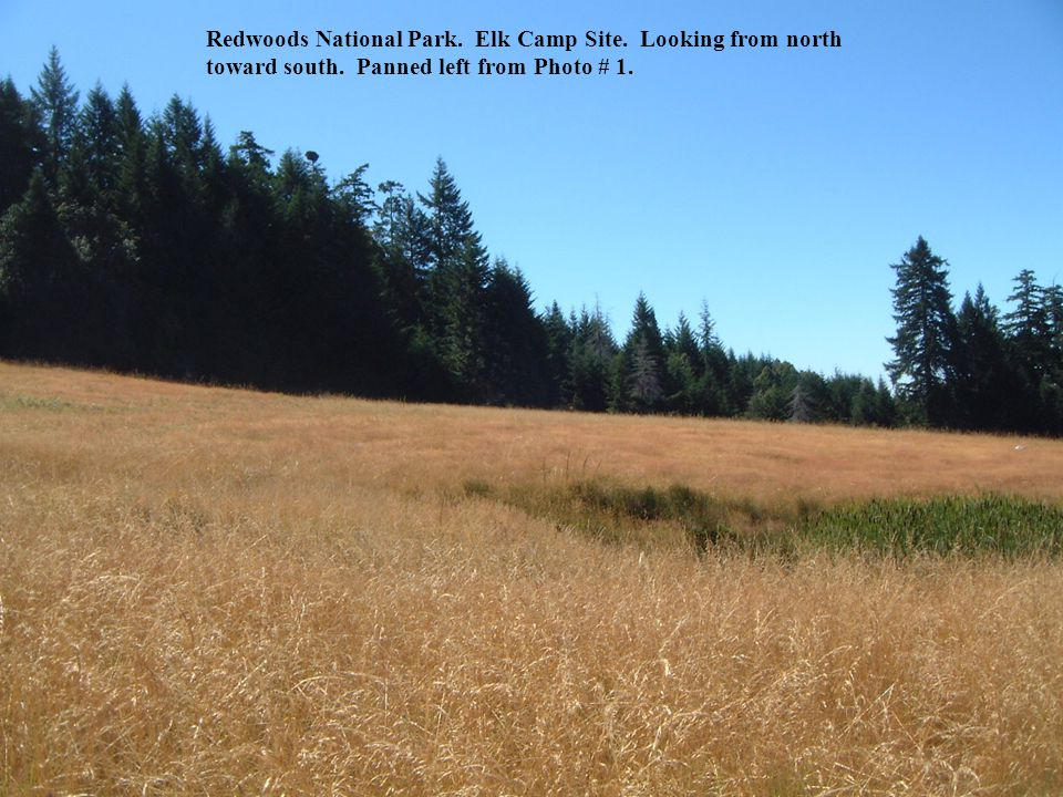 Redwoods National Park. Elk Camp Site. Looking from north toward south. Panned left from Photo # 1.
