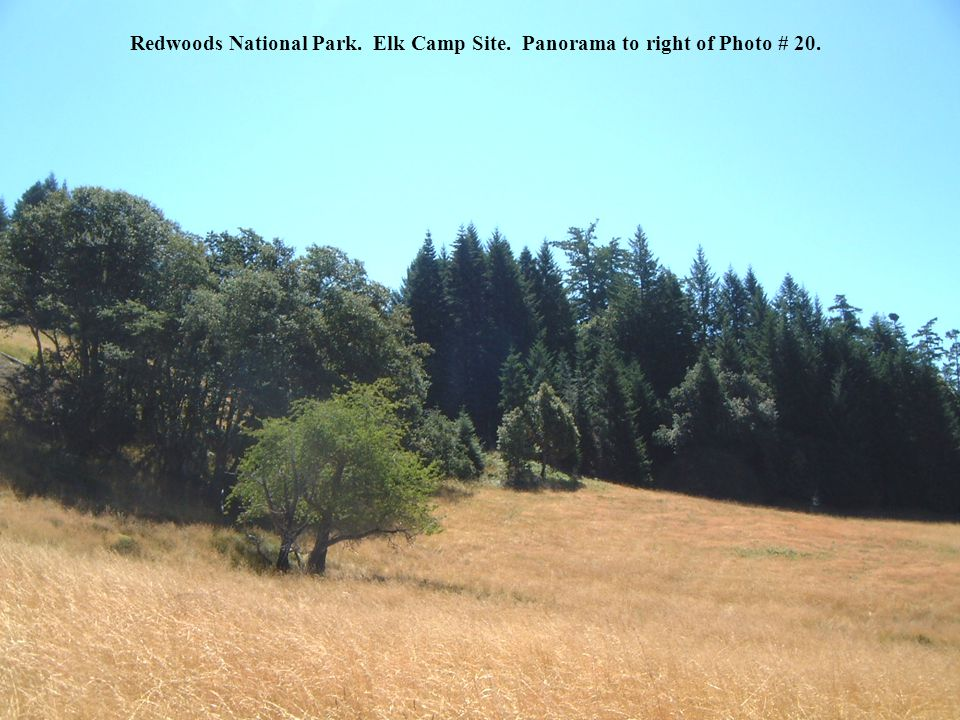 Redwoods National Park. Elk Camp Site. Panorama to right of Photo # 20.