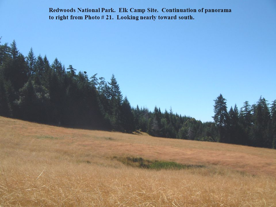 Redwoods National Park. Elk Camp Site. Continuation of panorama to right from Photo # 21.