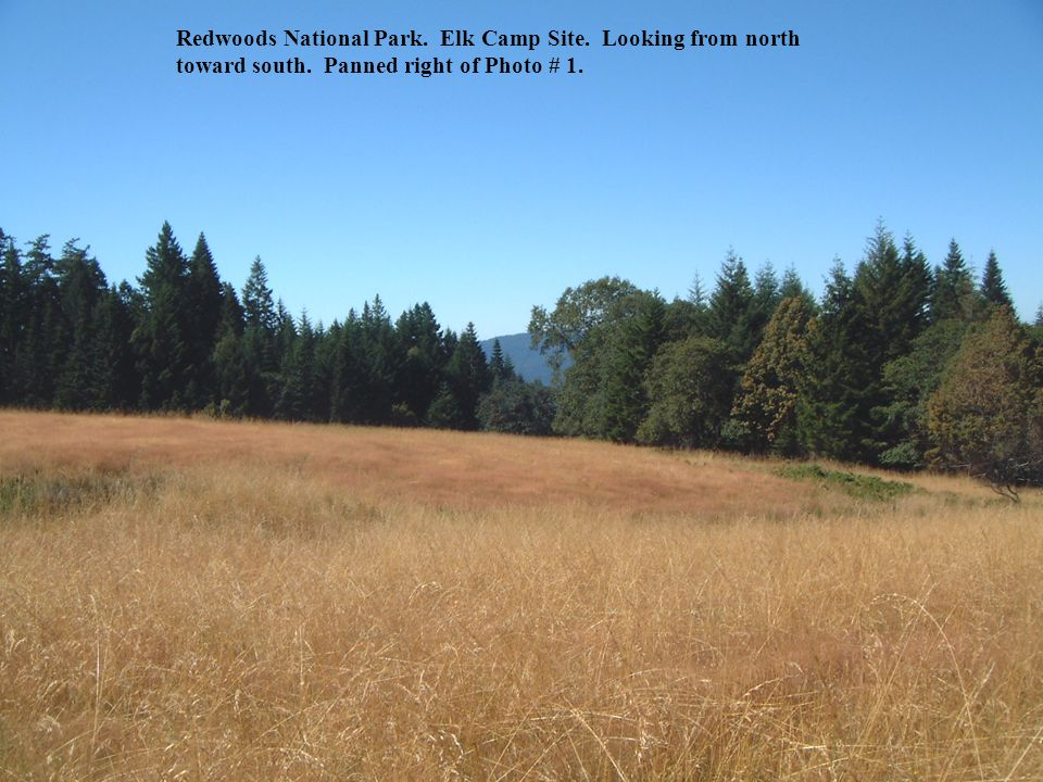 Redwoods National Park. Elk Camp Site. Continued panorama to right of Photo # 23.