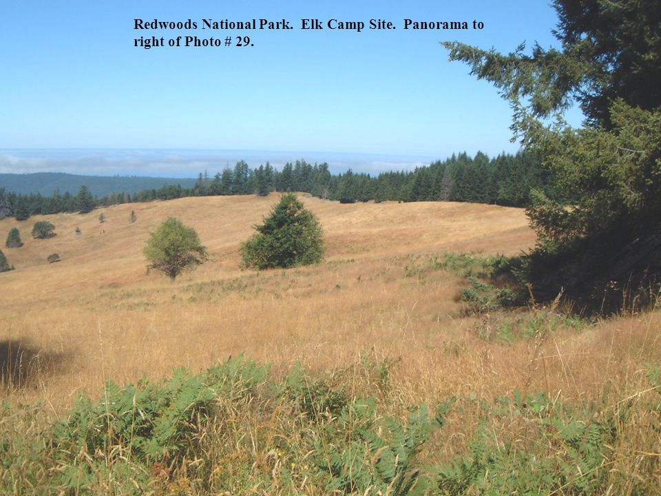 Redwoods National Park. Elk Camp Site. Panorama to right of Photo # 29.