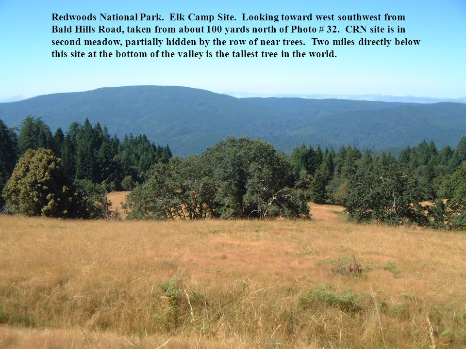 Redwoods National Park. Elk Camp Site.