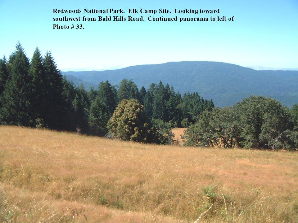 Redwoods National Park. Elk Camp Site. Looking toward southwest from Bald Hills Road.