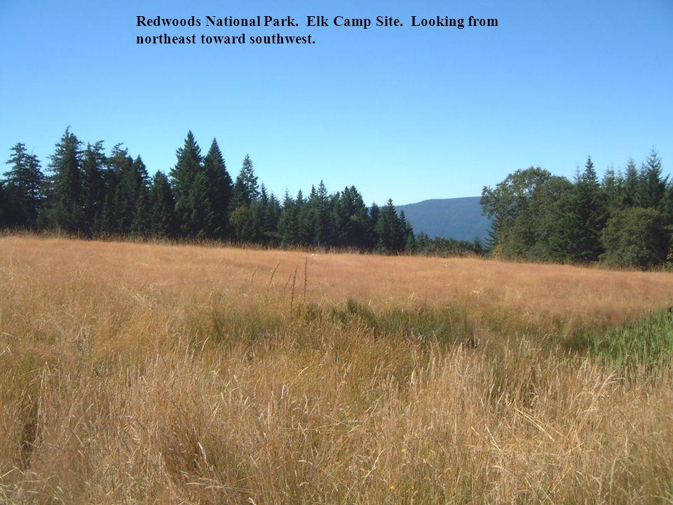 Redwoods National Park. Elk Camp Site. Looking from northeast toward southwest.