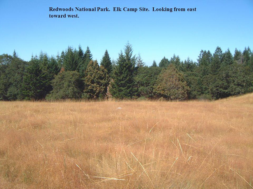 Redwoods National Park. Elk Camp Site. Looking from east toward west.