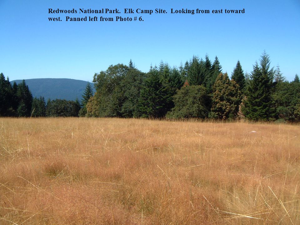 Redwoods National Park.Elk Camp Site. Looking from east toward west.